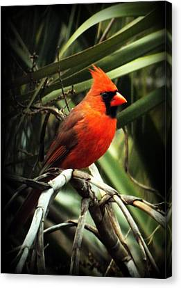 South Carolina State Bird Canvas Print - Simply Red by Karen Wiles