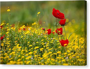 Canvas Print featuring the photograph Simply Red by Uri Baruch