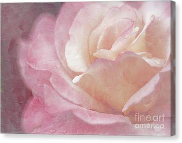 Close Focus Floral Canvas Print - Simply Rose by Darren Fisher