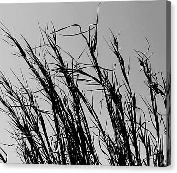 Canvas Print featuring the photograph Simply Straw by Candice Trimble