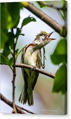 Singing A Song Of Joy Canvas Print by Sheen Watkins