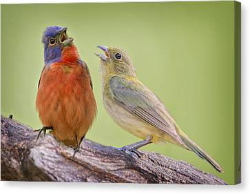 Singing Buntings Canvas Print by Bonnie Barry