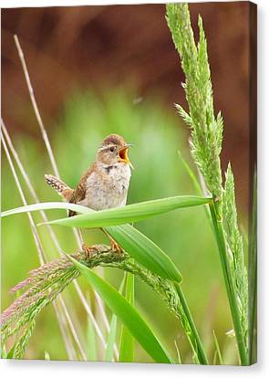 Singing For A Companion Canvas Print