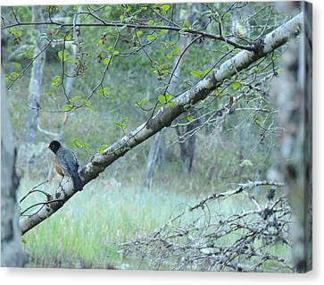 Canvas Print featuring the photograph Singing In The Trees by Karen Horn