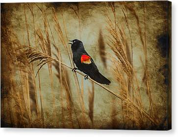 Singing Red Wing Canvas Print