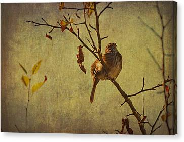 Canvas Print featuring the photograph Singing Sparrow by Peggy Collins