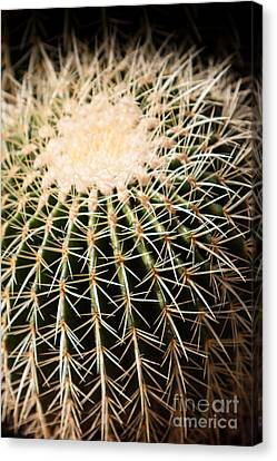 Canvas Print featuring the photograph Single Cactus Ball by John Wadleigh