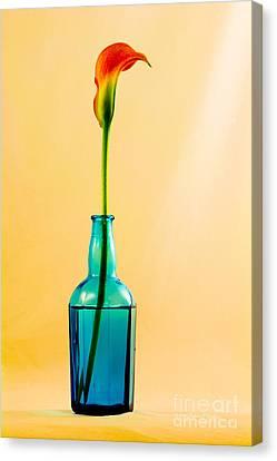 Single Calla In Blue Bottle Canvas Print