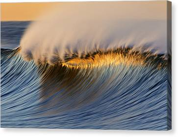 Canvas Print featuring the photograph Single Crest Mg_8700 by David Orias