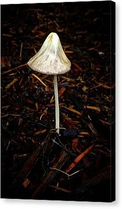 Single Mushroom Canvas Print