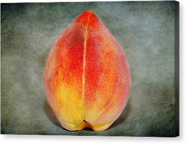 Single Peach Canvas Print by Linda Segerson