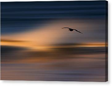 Canvas Print featuring the photograph Single Pelican  73a1102 by David Orias