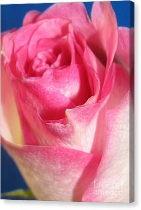 Canvas Print featuring the photograph Single Pink Rose 2 by Margaret Newcomb