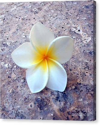 Single Plumeria Canvas Print