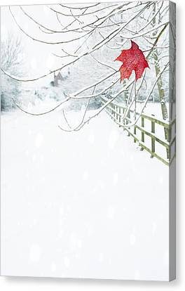 Frosty Canvas Print - Single Red Leaf by Amanda Elwell
