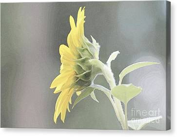 Single Sunflower Canvas Print by Leone Lund