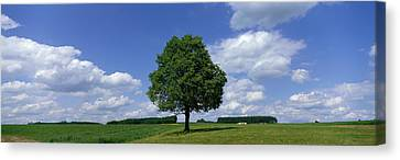 Single Tree, Germany Canvas Print by Panoramic Images