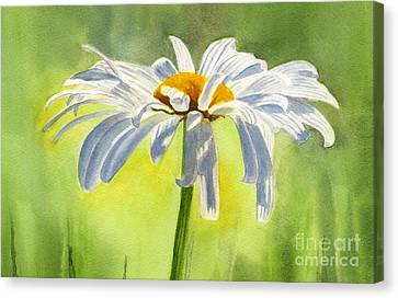 Single White Daisy Blossom Canvas Print by Sharon Freeman