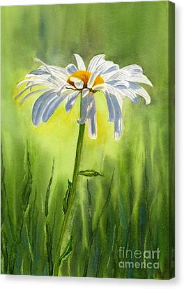 Single White Daisy  Canvas Print by Sharon Freeman