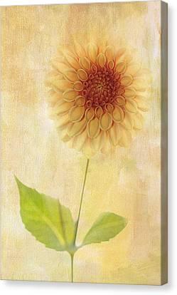 Single Yellow Dahlia Canvas Print by Rebecca Cozart