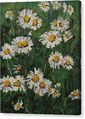 Singleton Daisies Canvas Print