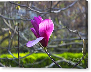 Singularly Spring Canvas Print