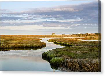 Sippewissett Marsh Canvas Print