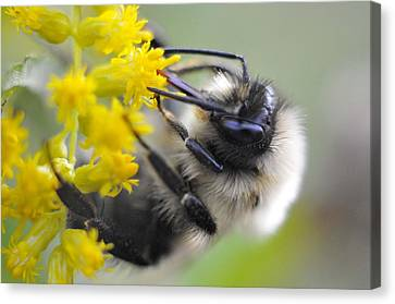 Sipping Bee Canvas Print