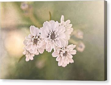 Sisters Canvas Print by Faith Simbeck