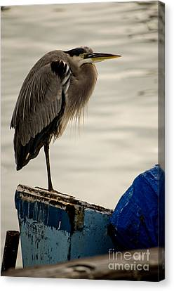 Sittin' On The Dock Of The Bay Canvas Print by Donna Greene