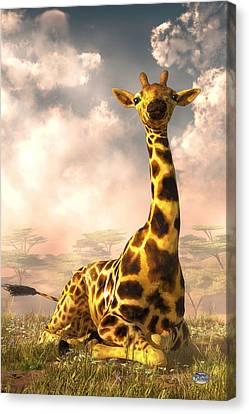 Sitting Giraffe Canvas Print by Daniel Eskridge