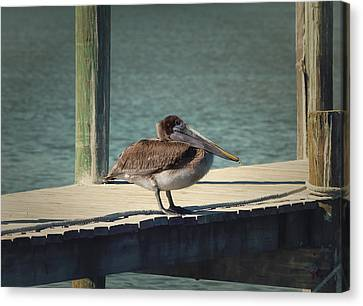 Sitting On The Dock Of The Bay Canvas Print by Kim Hojnacki