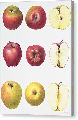 Six Apples Canvas Print by Margaret Ann Eden