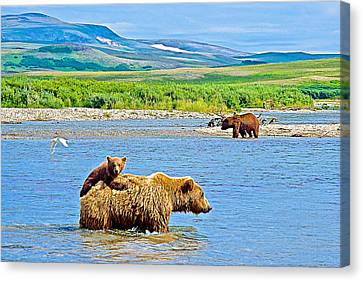 Six-month-old Cub Riding On Mom's Back To Cross Moraine River In Katmai National Preserve-alaska Canvas Print by Ruth Hager