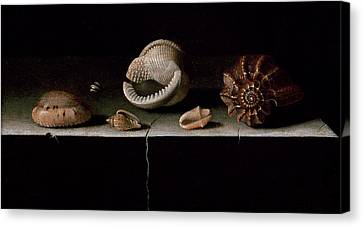 Six Shells On A Stone Shelf Canvas Print by Adrian Coorte