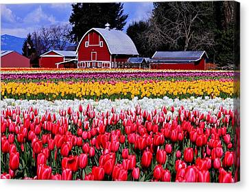 Skagit Valley Canvas Print