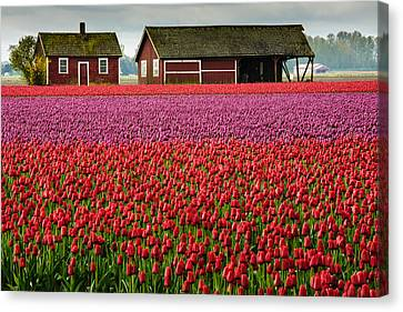 Skagit Valley Crops Canvas Print