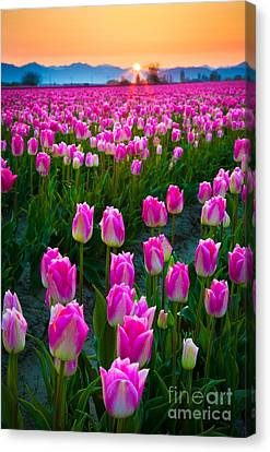 Skagit Valley Dawn Canvas Print by Inge Johnsson
