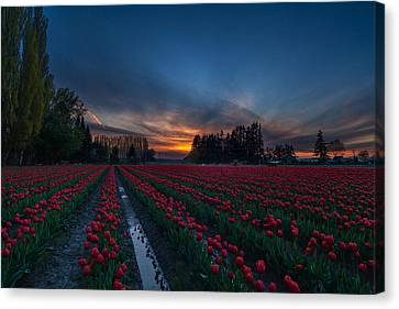Skagit Valley Evenings Close Canvas Print by Mike Reid