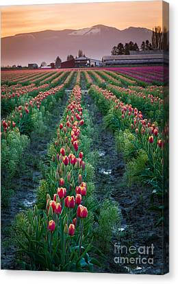 Skagit Valley Magic Canvas Print by Inge Johnsson