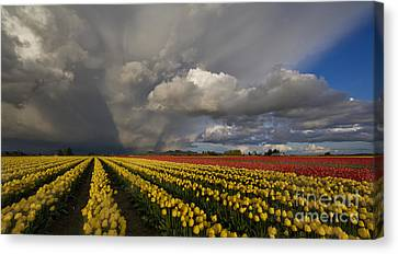 Skagit Valley Storm Canvas Print by Mike Reid