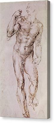 Sketch Of David With His Sling Canvas Print by Michelangelo Buonarroti
