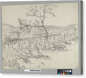 Sketch Of Vineyard Canvas Print by Carl Oscar August Erickson