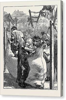 Sketches At A Northampton Wool Fair Filling The Bales Canvas Print by English School