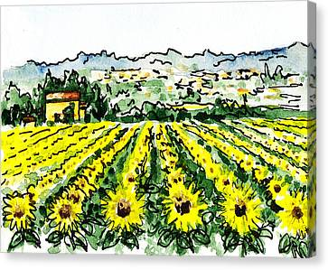 Sketching Italy Sunflowers Of Tuscany Canvas Print