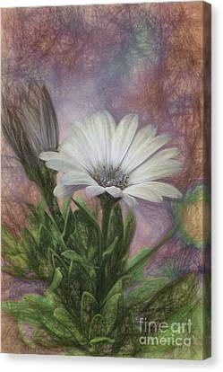 Sketchy Daisy In Mother Of Pearl Canvas Print