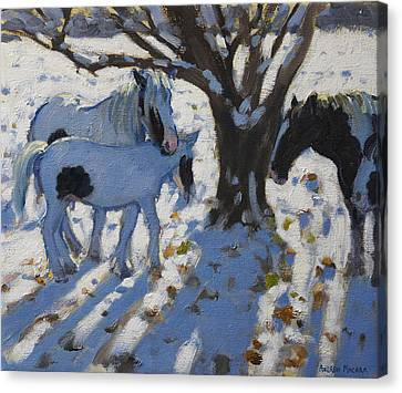 Skewbald Ponies In Winter Canvas Print by Andrew Macara
