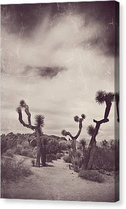 Skies May Fall Canvas Print by Laurie Search