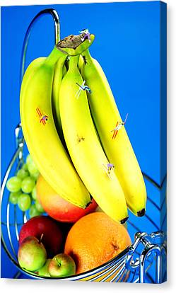 Skiing On Banana Little People On Food Canvas Print by Paul Ge