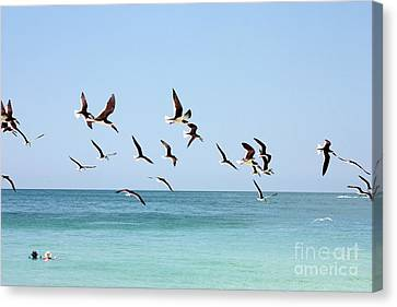 Skimmers And Swimmers Canvas Print by Carol Groenen